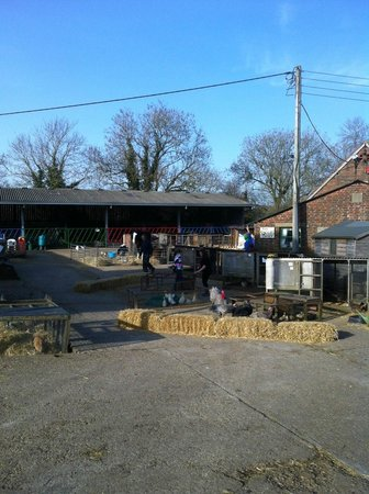 Hook, UK: Miller's Ark farm yard
