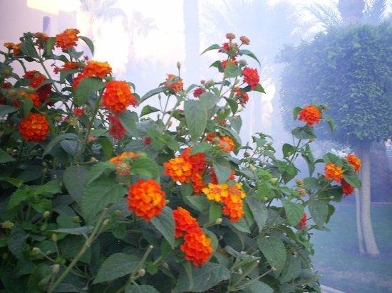 Le Pacha Resort : По вечера окуривают деревья и цветы