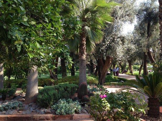 La Mamounia Marrakech : View from lunch terrace