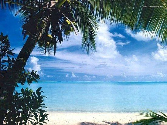 Iberostar Punta Cana: Coqueiros - Magnifico.