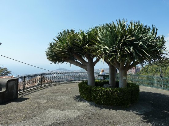 Monte Palace Tropical Garden: Nice view over Funchal