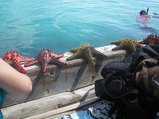 Palumboreef Beach Resort: Stelle marine