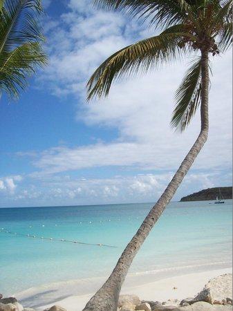 Halcyon Cove by Rex Resorts : En marchant sur la plage, véritable carte postale