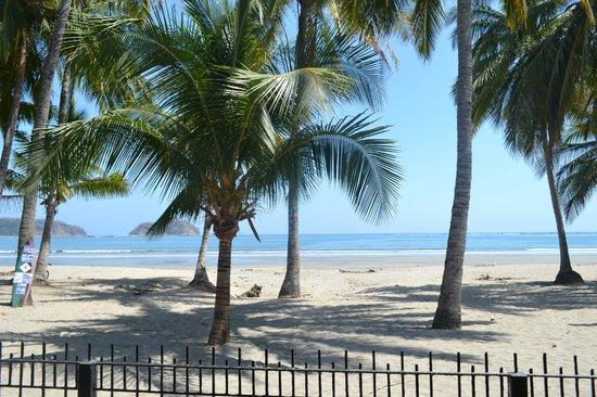 Samara Tree House Inn: beach