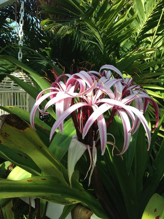 Sea Esta Villas : flower in bloom during our stay