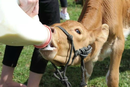 Maleny, Australië: Hand feed the baby animals