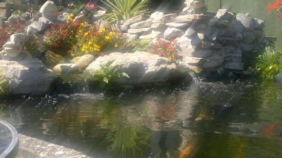 Watersedge Guest House: Koi pond @ Watersedge