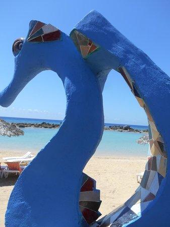 Ancon Beach: Cavallucci di mare