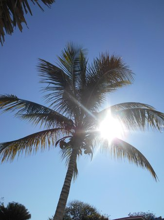 Ancon Beach: Le palme...