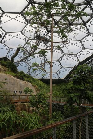 Eden Project: view from the Rainforest Canopy Walkway
