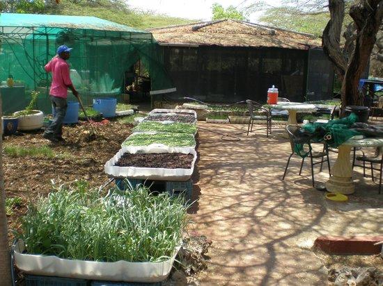 Landhuis Daniel Plantation Restaurant: Home-grown greens