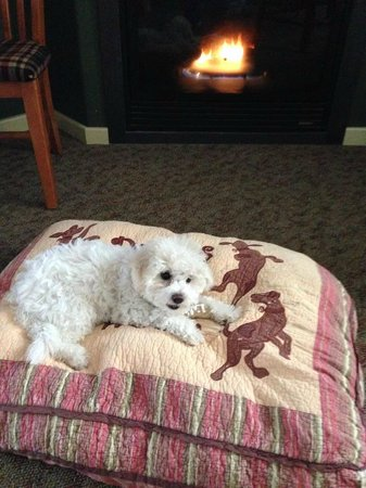 Common Man Inn & Spa: Lily enjoying her treat by the fire