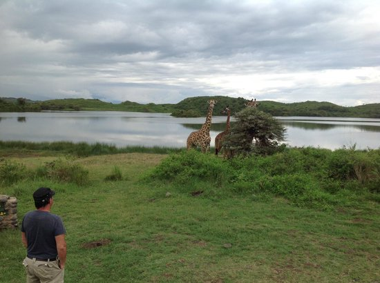 Arusha National Park: Who is looking at who?