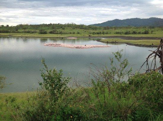 Arusha National Park: Thousands of flamingos