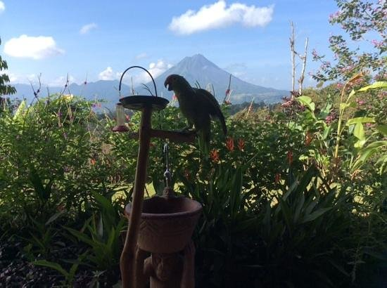 Leaves and Lizards Arenal Volcano Cabin Retreat: Breakfast companion and a volcano view.