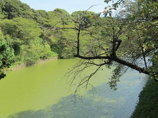 Chidorigafuchi: 緑、緑