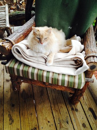 Lake Rabun Hotel & Restaurant : Resident Cat