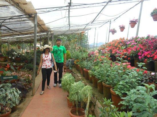 Rose Gardens : Lot of varieties
