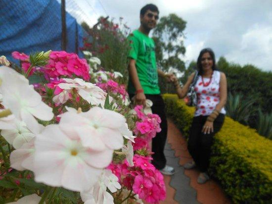 Rose Gardens : Beautiful flowers