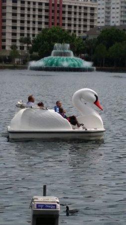 Lake Eola Park : Large, sturdy swan boats