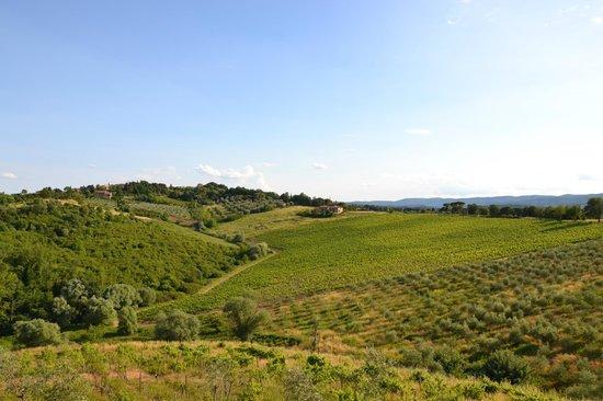 La Loggia - Villa Gloria: oliveti e vigne davanti alla Loggia