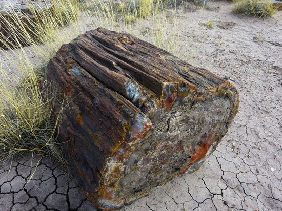 Painted Desert : a rock log