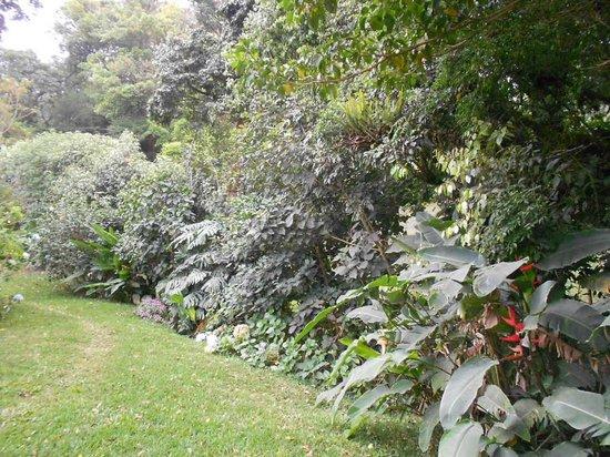 Mariposa Bed & Breakfast: Nice garden