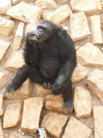 Riyadh Zoo: Me
