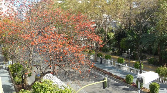 Hotel San Cristobal: View down at the orange trees