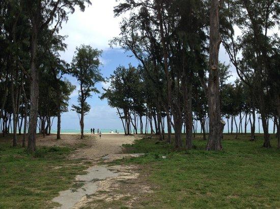 Hawaiian Escapades - Private Tours: Beach scenes