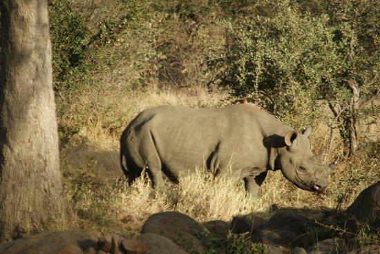 Naledi Bushcamp and Enkoveni Camp: Rhino