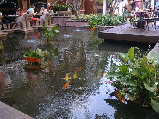 โรงแรมรามบุตรี วิลเลจ: Пруд с живыми рыбами! Самое лучшее, что есть в этом отеле.