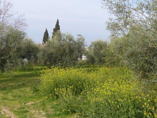 Hacienda La Vereda : Amidst the olive groves