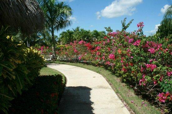 The Reserve at Paradisus Palma Real: Magical landscaping