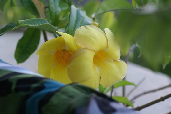 Park Royal Huatulco: Flowers everywhere