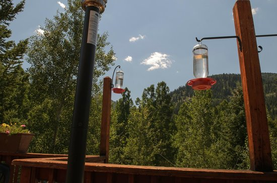 Hummingbirds Out On The Patio Bring Your Camera Picture Of - Out on the patio
