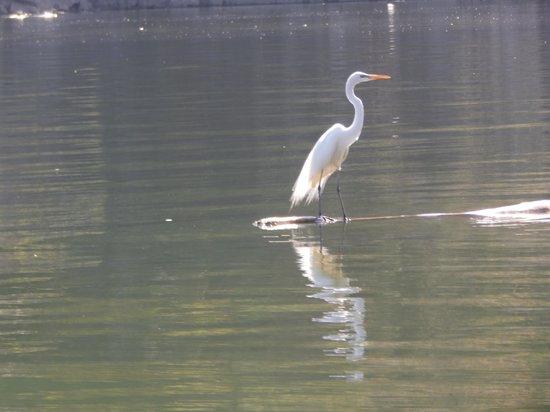 Cañón del Sumidero: heron