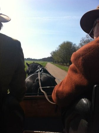 Ascot Carriages: View from the carriage
