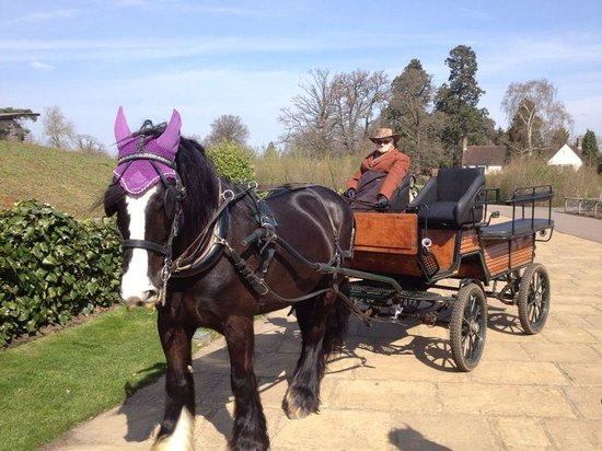 Ascot Carriages: Henry