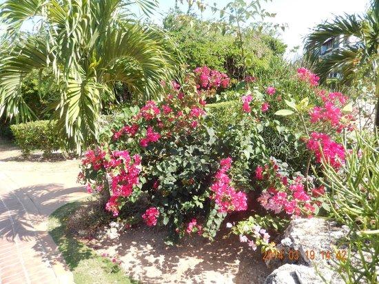 Memories Paraiso Beach Resort : La végétation et aménagement peisager de toute beauté