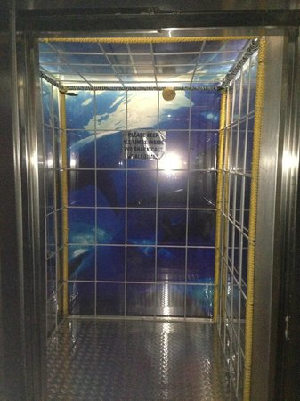 Protea Hotel Fire & Ice! by Marriott Cape Town: cage diving themed elevator