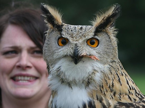 Dalhousie Castle Falconry: Kylie and feeding owl