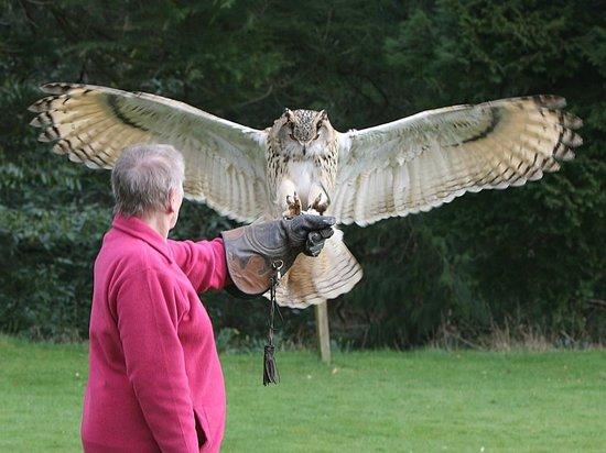 Dalhousie Castle Falconry Owl Landing On Hand