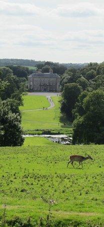 Doneraile Park & House