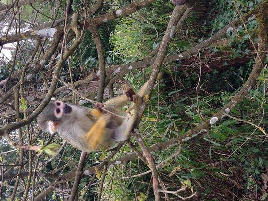 La Vallee des Singes : La vallée des singes