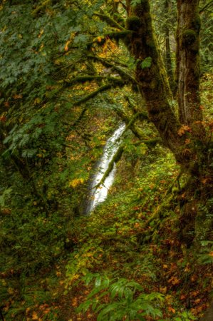 Columbia River Gorge National Scenic Area: Lush greenery abounds everywhere.