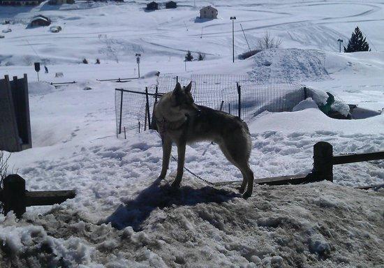 Hotel Steinbock: Il lupo di guardia all'hotel