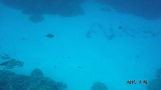 Honaunau Bay : Aloha in stones