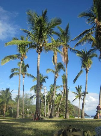Victoria Hotel : Grand Anse Beach Palms (nearby)