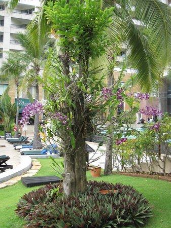 Hilton Hua Hin Resort & Spa: The orchids around the Hilton Property